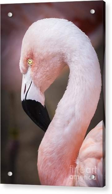 The Flamingo, Animal Decor, Nursery Decor, Flamingo Gifts, Flamingo Phone Case,  Acrylic Print