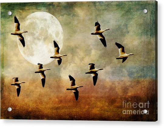 The Flight Of The Snow Geese Acrylic Print