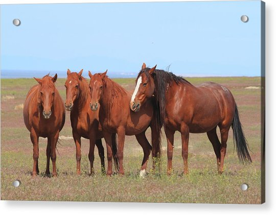 The Girls Club Acrylic Print by Gene Praag