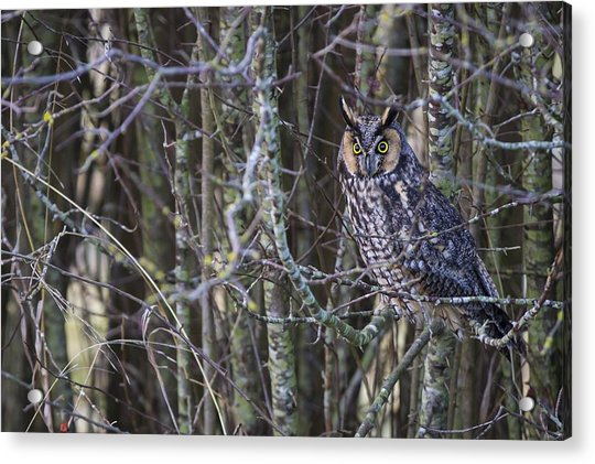 The Look Of Surprise Acrylic Print