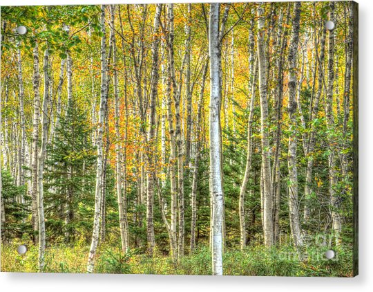 The North Woods Acrylic Print