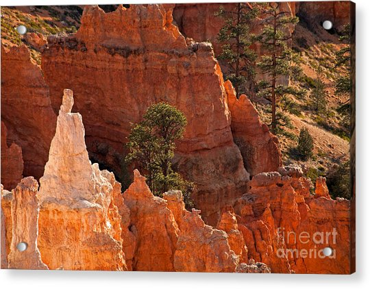 The Popesunrise Point Bryce Canyon National Park Acrylic Print