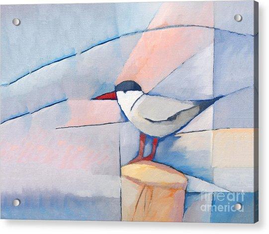 The Tern Acrylic Print