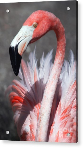 This Is My Good Side Acrylic Print by Sheryl Unwin