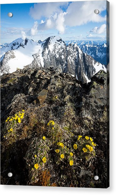 Acrylic Print featuring the photograph Thriving In Adversity by Tim Newton