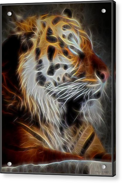 Tiger At Rest Acrylic Print