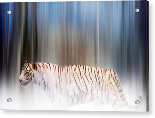 Acrylic Print featuring the photograph Tiger In The Mist by Valerie Anne Kelly