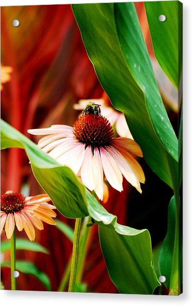 To Be A Bee Acrylic Print