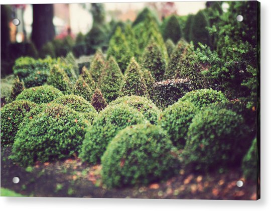 Topiary Photograph By Jill Ferry Photography