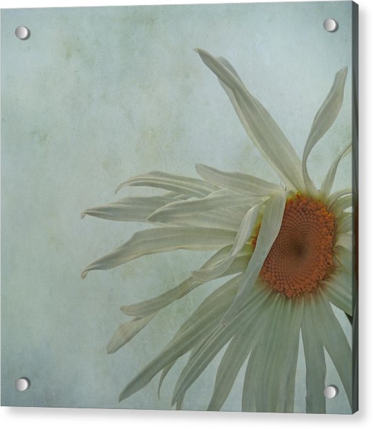 Acrylic Print featuring the photograph Tousled  by Sally Banfill