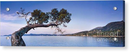 Tree By The Sea - Cote D'azur Acrylic Print