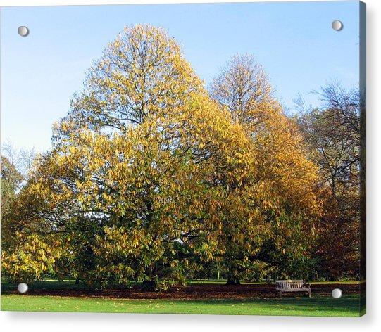 Tree In Kew Gardens Acrylic Print