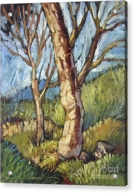 Trees In Spring Acrylic Print