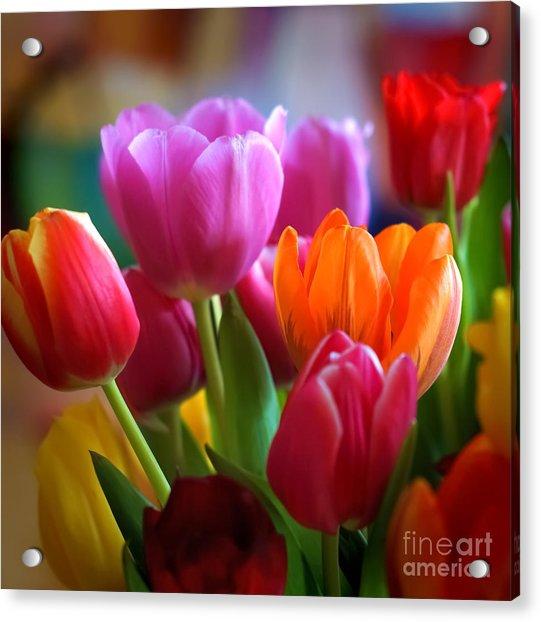 Tulips Light Acrylic Print