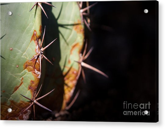 Two Shades Of Cactus Acrylic Print