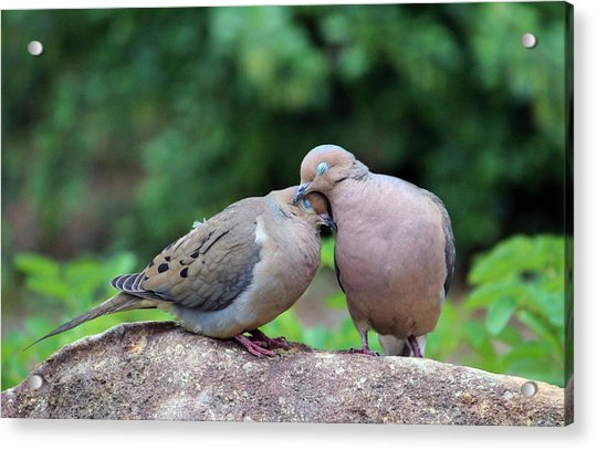 Acrylic Print featuring the photograph Two Turtle Doves by Cynthia Guinn