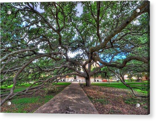 Under The Century Tree Acrylic Print