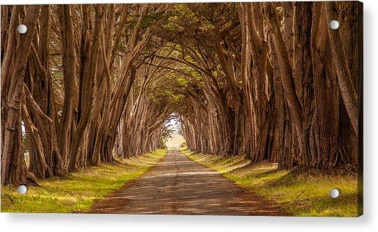 Valiant Trees Acrylic Print