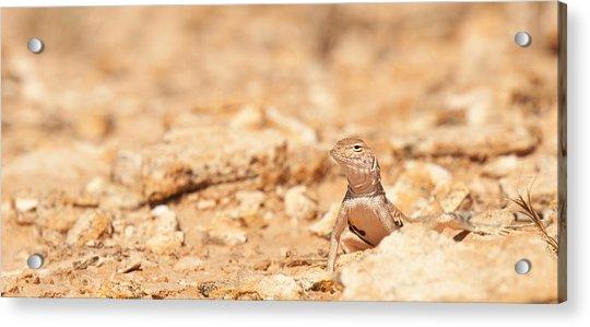 Valley Lizard Acrylic Print