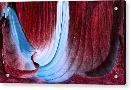 Velvet Cave Acrylic Print