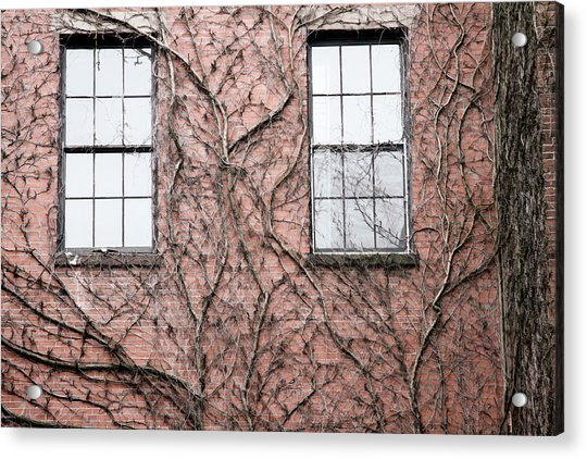 Vines And Brick Acrylic Print