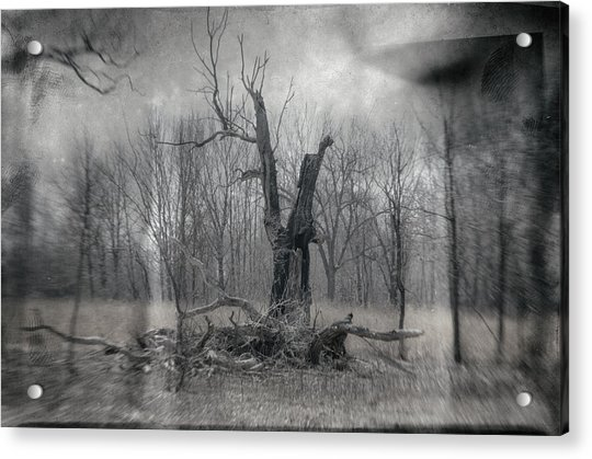 Visitor In The Woods Acrylic Print