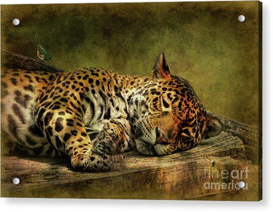 Wake Up Sleepyhead Acrylic Print