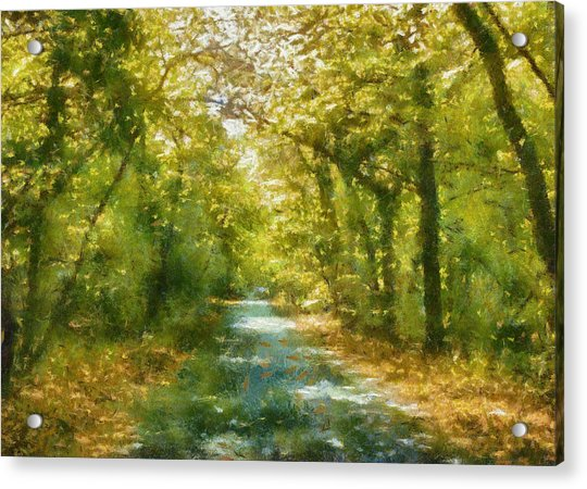 Walk In The Woods Acrylic Print