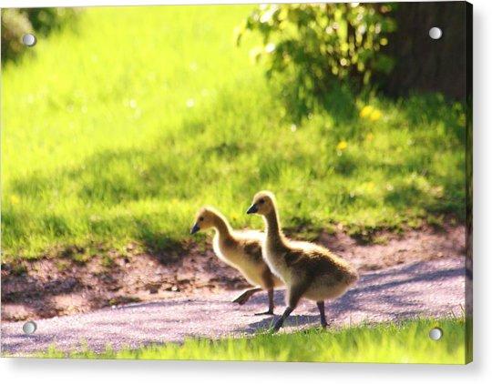 Walking In Park Acrylic Print