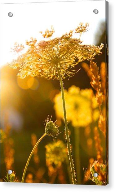 Warmth Of The Sun Acrylic Print