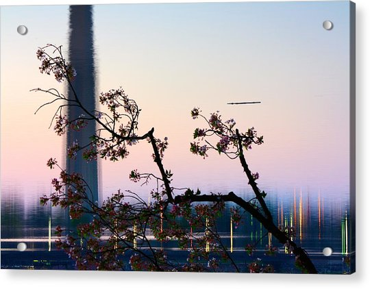 Washington Monument Reflection With Cherry Blossoms Acrylic Print