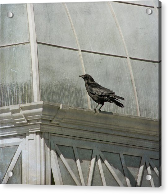 Acrylic Print featuring the photograph Watching by Sally Banfill