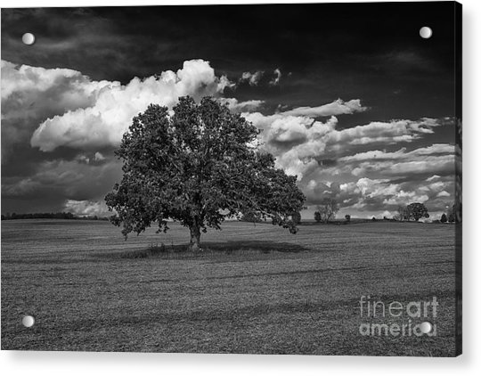 Weathered Oak Acrylic Print