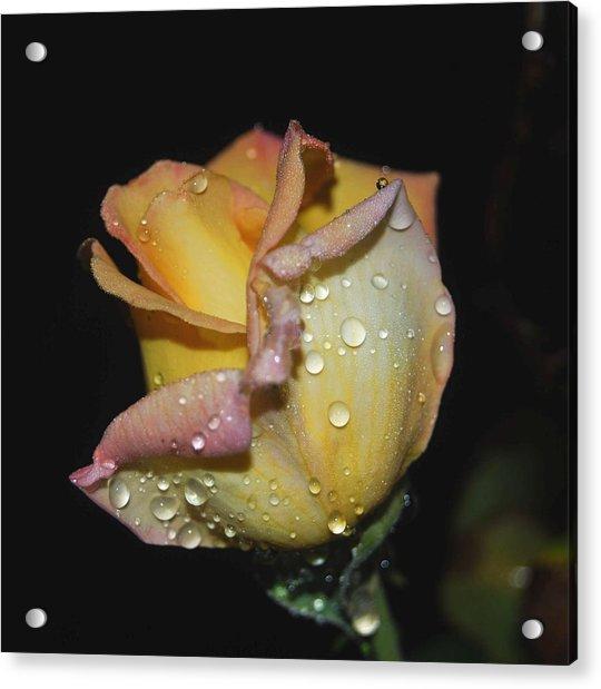 Wet And Wonderful Acrylic Print