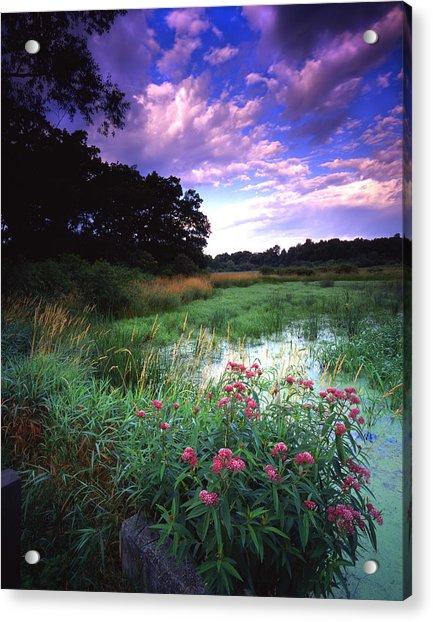 Wetland Wonder Acrylic Print