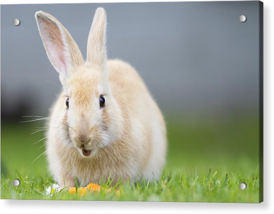 What's Up Doc Acrylic Print