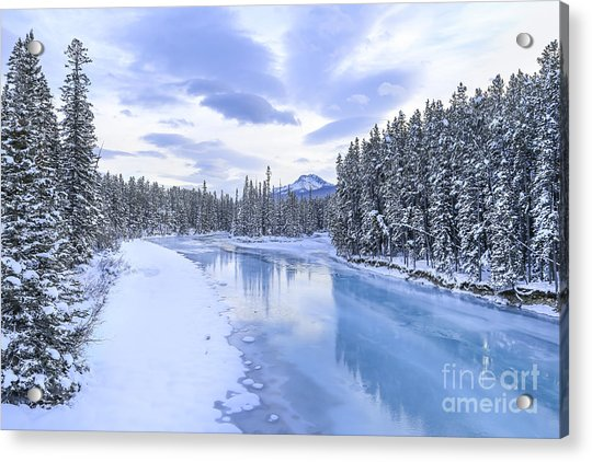 When The Trees Were Silenced Acrylic Print
