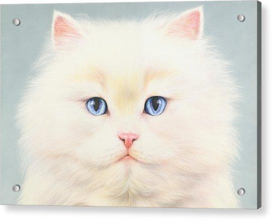 White Persian Acrylic Print