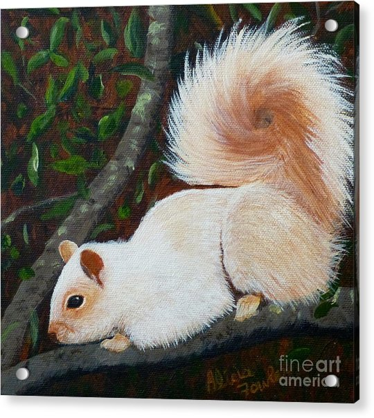 White Squirrel Of Sooke Acrylic Print