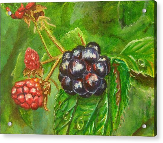 Wild Blackberries Acrylic Print