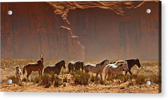 Wild Horses In The Desert Acrylic Print