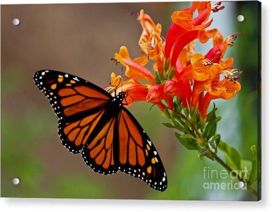 Winged Grace Acrylic Print