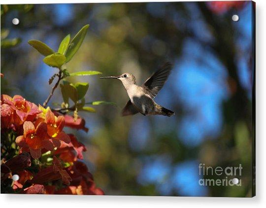 Winged Wonders Acrylic Print