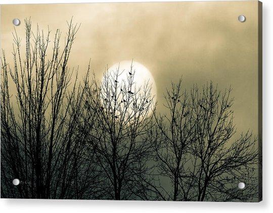 Winter Into Spring Acrylic Print