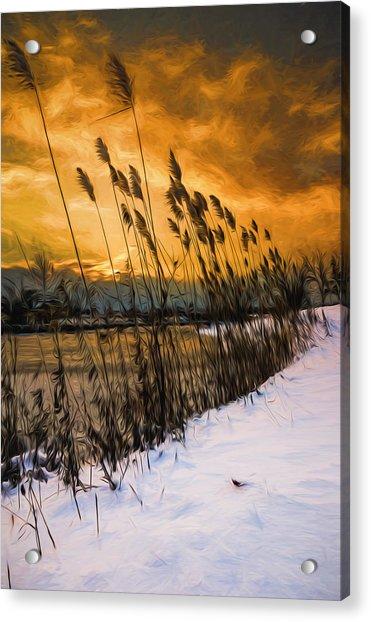 Winter Sunrise Through The Reeds - Artistic Acrylic Print