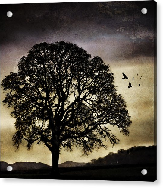 Winter Tree And Ravens Acrylic Print