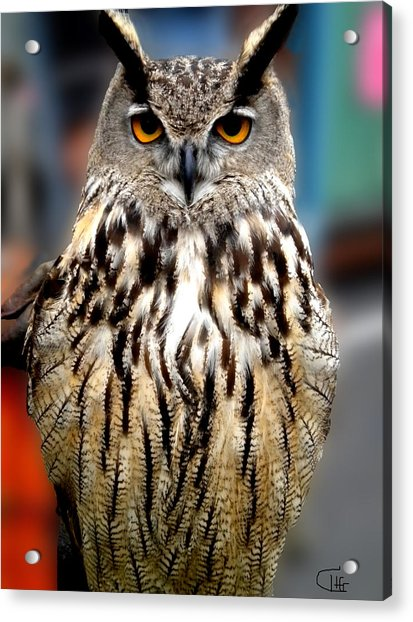 Acrylic Print featuring the photograph Wise Forest Mountain Owl Spain by Colette V Hera  Guggenheim