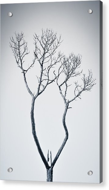 Acrylic Print featuring the photograph Wishbone Tree by Carolyn Marshall