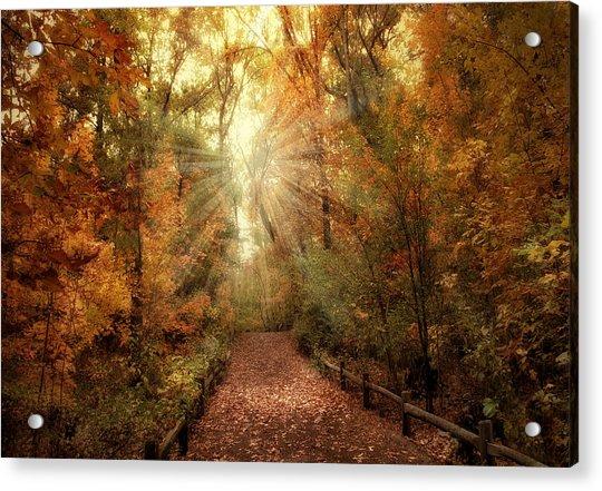 Woodland Light Acrylic Print