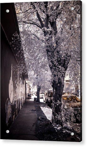 Wynwood Treet Shadow Acrylic Print